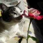 Homemade Cat Repellent