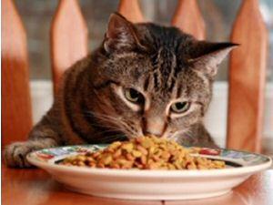 Homemade Cat Treat Recipe
