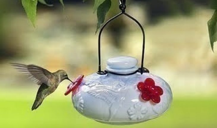 Homemade Hummingbird Food - Homemade Guides
