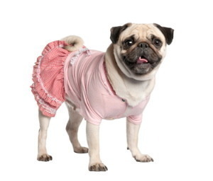 Homemade Pet Costumes