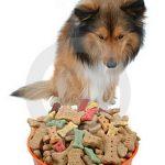 Homemade Pet Food