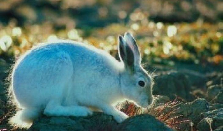 Homemade Rabbit Repellent - Homemade Guides