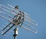Homemade HDTV Antenna
